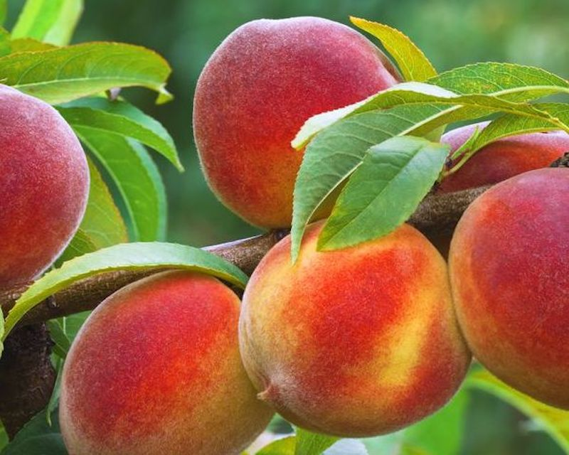 This image has an empty alt attribute; its file name is fruit-garden.jpg