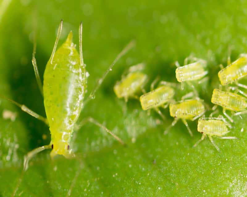 This image has an empty alt attribute; its file name is garden-pests.jpg
