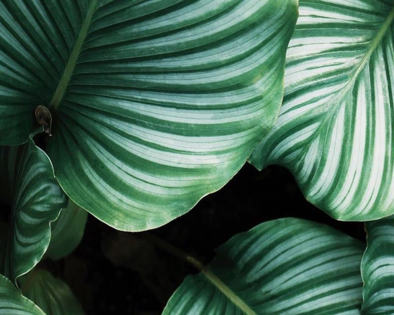 This image has an empty alt attribute; its file name is houseplants.jpg