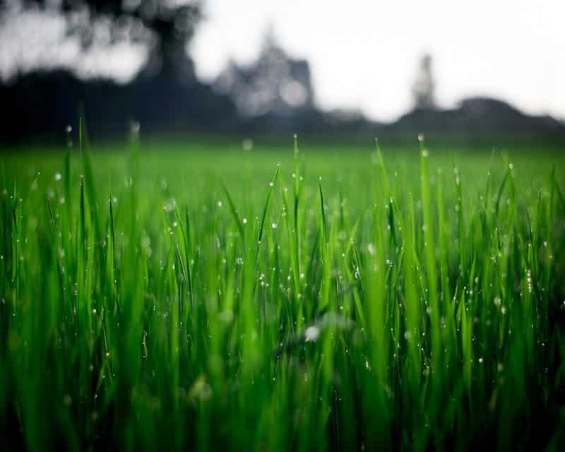 This image has an empty alt attribute; its file name is lawns.jpeg